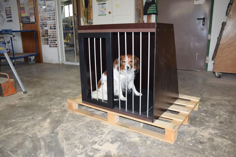 unser Rico durfte die Hundebox testen
